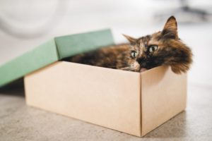 cat in box 980x653 1